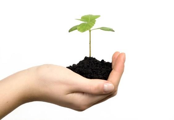 Junger Baum wächst in der Hand